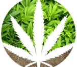 PuffsCoin logo
