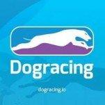 DogRacing (DGR) ICO logo