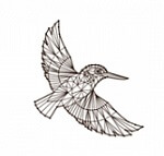 Alcedo (ALCE) ICO logo